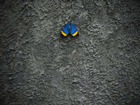 Butterfly sitting on concrete wall background