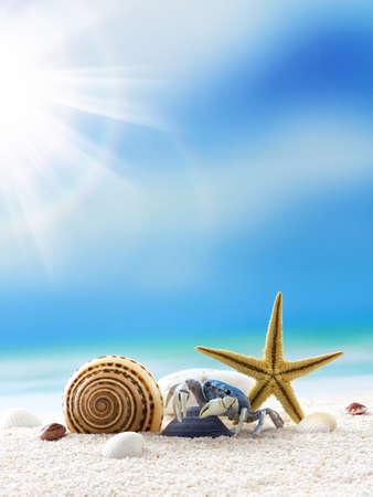 Starfish and crab on the beach