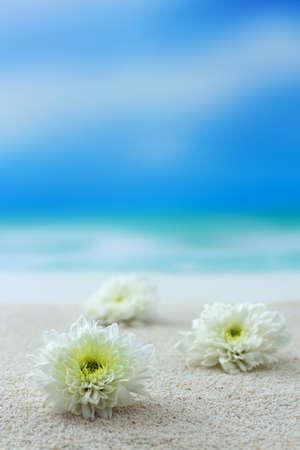 Tropical flowers on beach Stock Photo