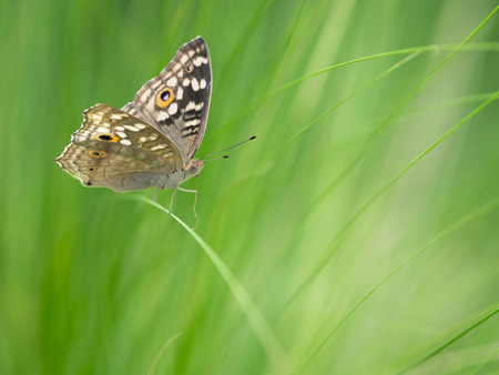 beauty butterfly sitting on grass