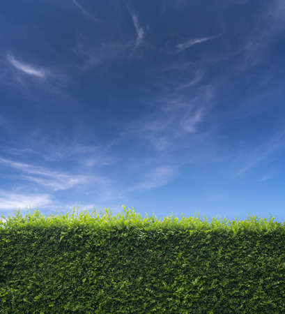 background with grass and blue sky in the back