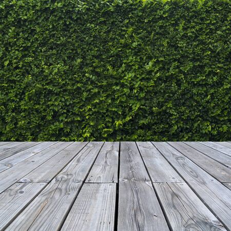 Green leaves wall and wood floor. Stock Photo