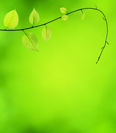 Natural green background with selective focus. Stock Photo