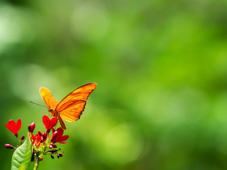 Butterfly on red flowers, green background.