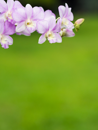 fondos violeta: Orquídea en fondo verde. Foto de archivo