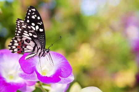 Butterfly on pink flower.