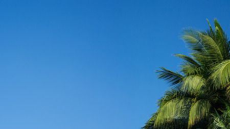 Palm leaf in the blue sky.