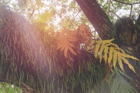 Parasitic on the tree banyan beautiful beauty
