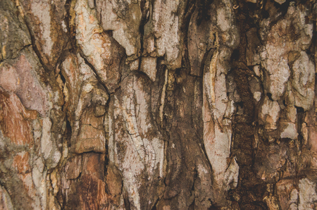 Claw Bark natural summer travel tree view wildlife, wood closeup