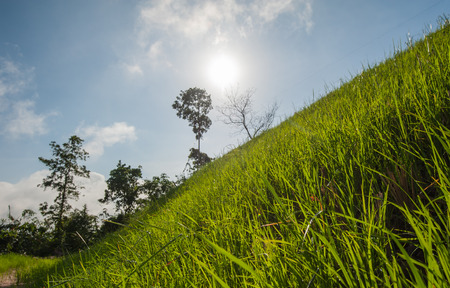 maintain: Vetiver grass to prevent soil erosion maintain and preserve the balance of nature.