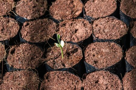 tillage: The Tillage and cultivation of plants in the soil convert. Stock Photo