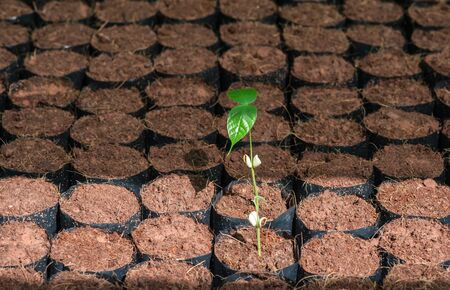 convert: The Tillage and cultivation of plants in the soil convert. Stock Photo