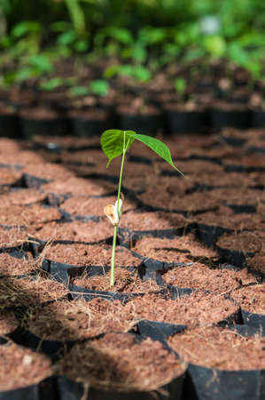 dispense: The Tillage and cultivation of plants in the soil convert. Stock Photo