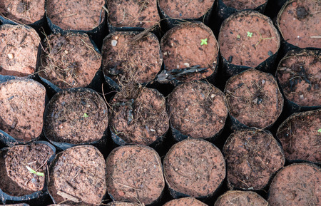 soft peak: The Tillage and cultivation of plants in the soil convert. Stock Photo