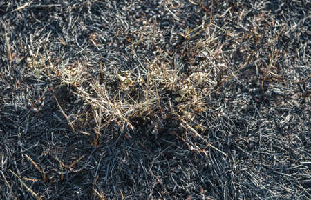 the ashes: Grass fire burning into ashes. Stock Photo