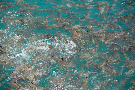Natural fish in the clear water.