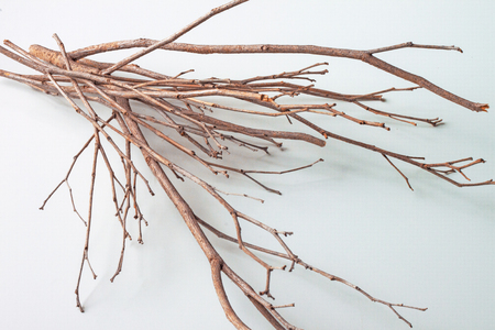 Twigs on white background