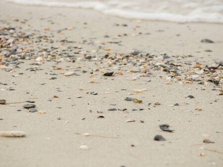 sandy brown: Many Shell on The Beach Stock Photo