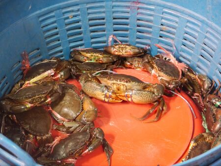Sea Craps in Basket Stock Photo