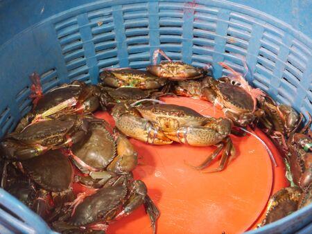 craps: Sea Craps in Basket Stock Photo