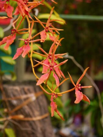 red orchid: Small Red Orchid Formal Garden