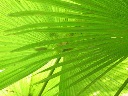 fullframe: Fullframe Palm Leaf, Nature Background Stock Photo