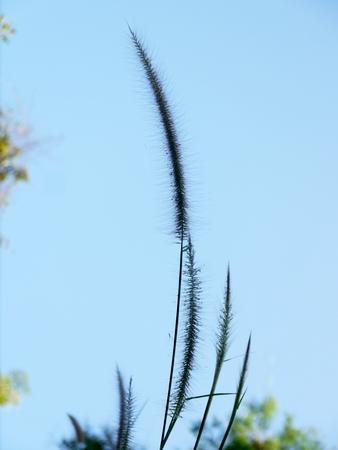 Nahes trockenes Gras, Natur-Hintergrund Standard-Bild - 69520950