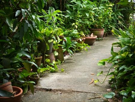 Many pot tree beside cement walkway