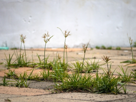 dispersed: The grass flower on the rocky ground Stock Photo
