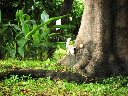 ardilla: Chipmunk is standing at root tree