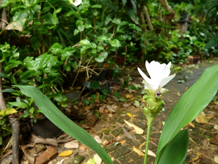 white flower in the garden Stock Photo