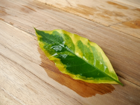 wet leaf: wet leaf on wooden background