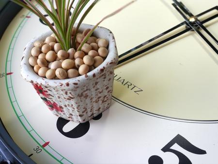 small pot tree on clock
