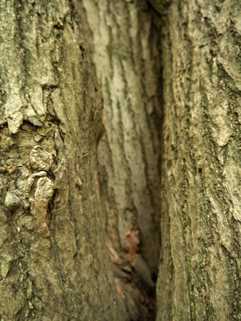 lesions: The crease bark of tree
