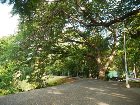 catchment: Walkway River Side on Morning