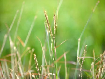 GRASS FLOWER ON BLUR BACKGROUND