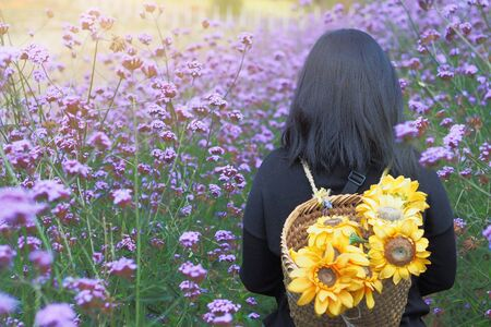 The back of a woman is carrying a basket and has sunflower in verbena flower gardens at Mon Jam, Thailand. with copy space. Standard-Bild - 144850843