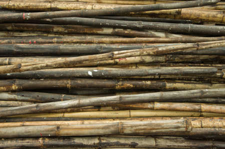 disorderly: bamboo Stock Photo