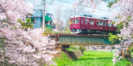 Cherry Blossom with Train from Shukugawa Park in Nishinomiya City, Hyogo Prefecture, Japan.