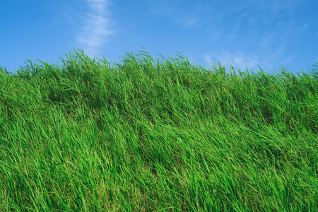 Grassland with Blue Sky in Summer Season, Background Material.