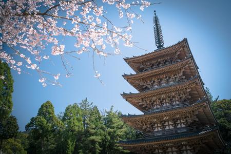 Five Storied Pagoda, Daigoji Temple (Daigo-ji) - April 2, 2015: Five Storied Pagoda is a famous landmark of Daigoji Temple in Fushimi Ward, Kyoto City, Japan. 新闻类图片