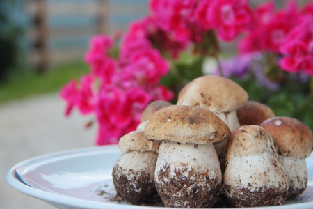 mushrooming: Plate of fresh porcini mushrooms with red flowers in the background