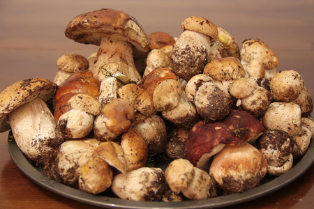 dozens: Plate with dozens of fresh porcini mushrooms collected just in the forest Stock Photo