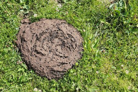 droppings: Cow dung on the grass