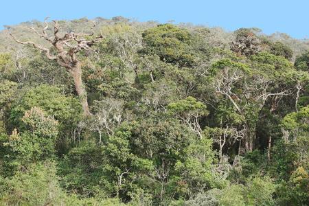 plains: Rain forest in Horton Plains Sri Lanka Stock Photo
