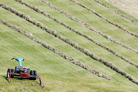 motorized: Motorized mower and rows of cut hay (windrow)