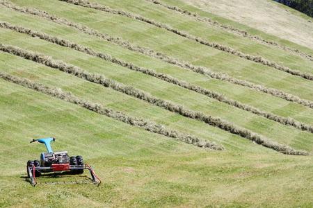 MOTORIZADO: segadora motorizada y filas de heno cortado (hilera)