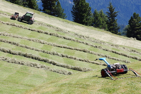motorized: Motorized mower, swather and rows of cut hay (windrow) Stock Photo