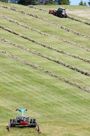 MOTORIZADO: segadora motorizada, agavilladora y filas de heno cortado (hilera)