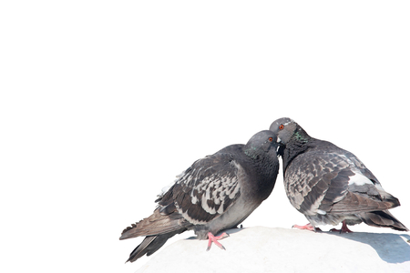 Two lovely pigeons kissing on a white stone Stock Photo